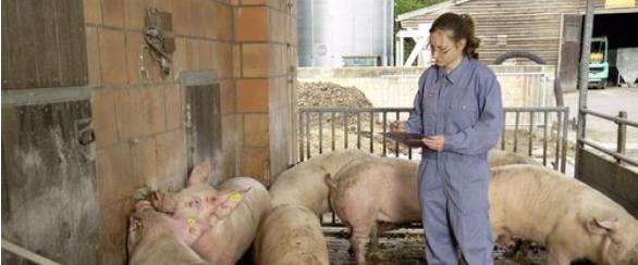 Frauen landwirtschaft single : Die neu gestaltete Singlebörse für Landwirte